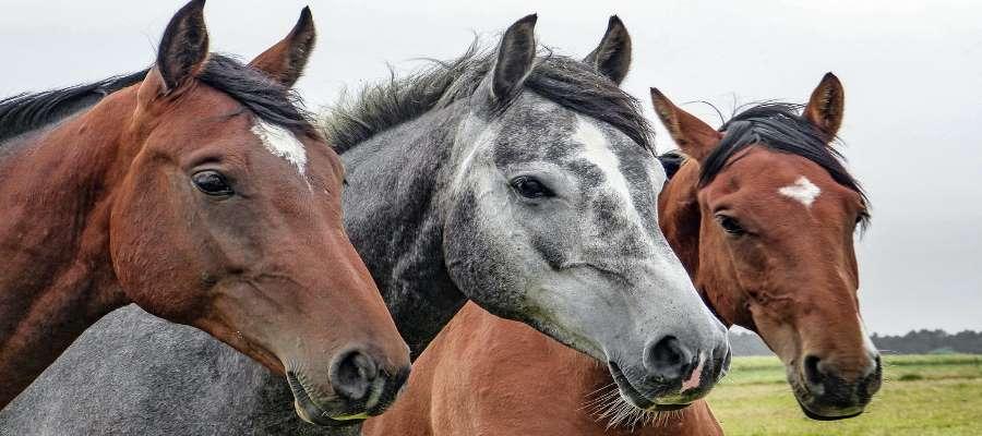 grosshandel pferdesport